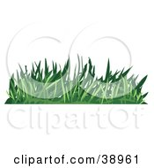 Tuft Of Green Turf by Tonis Pan