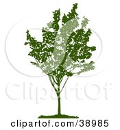 Clipart Illustration Of A Young Green Silhouetted Tree With Foliage
