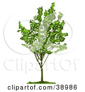 Clipart Illustration Of A Young Tree With Green Foliage