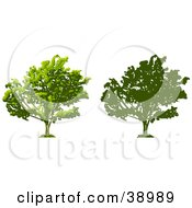 Clipart Illustration Of A Tree Thick With Foliage Also Shown In Silhouette