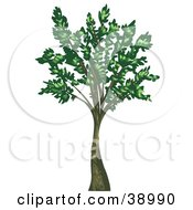 Clipart Illustration Of A Tall Mature Tree With Green Leaves Growing From The Branches