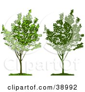 Clipart Illustration Of A Young Growing Tree With Green Foliage Also Shown In Silhouette