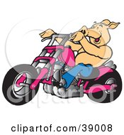 Clipart Illustration Of Biker Pig Riding A Chopper Motorcycle by Snowy #COLLC39008-0092