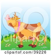 Poster, Art Print Of Brown Spotted Farm Cow Mooing On A Green Grassy Hill