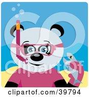 Blue Eyed Female Giant Panda Bear Wearing Pink Snorkel Gear Holding A Fish Underwater