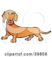 Clipart Illustration Of A Confused Brown Dachshund Dog