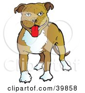 Clipart Illustration Of A Happy Brown And White American Staffordshire Terrier Dog by Snowy