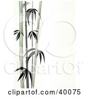 Clipart Illustration Of Stalks Of Pale Green Bamboo On A White Background