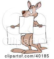 Kangaroo Holding Up Three Blank Signs