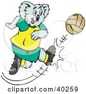 Soccer Koala Kicking A Ball Hard