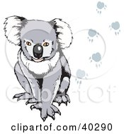 Clipart Illustration Of A Koala With Paw Prints