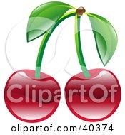 Clipart Illustration Of Shiny Organic Red Cherries by AtStockIllustration