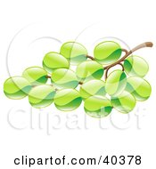 Clipart Illustration Of A Shiny Organic Bunch Of Green Grapes