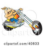 Clipart Illustration Of A Happy Shirtless Pig In Sunglasses Riding An Orange Chopper by Snowy