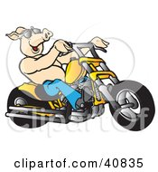 Clipart Illustration Of A Happy Shirtless Pig In Shades Riding A Yellow Chopper by Snowy