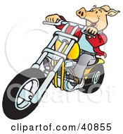 Clipart Illustration Of A Happy Hog Riding A Yellow Chopper