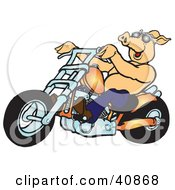 Clipart Illustration Of A Happy Shirtless Pig In Shades Riding An Orange Chopper