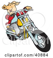 Clipart Illustration Of A Carefree Hog Riding A Yellow Chopper