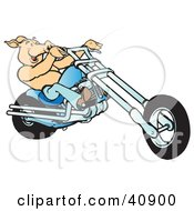 Clipart Illustration Of A Happy Shirtless Hog Riding A Blue Chopper by Snowy