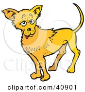 Friendly Yellow Chihuahua Dog