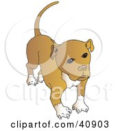 Clipart Illustration Of A Cute Brown And White Pitbull With A Full Tail
