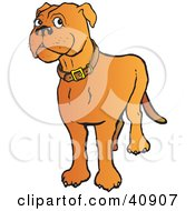 Clipart Illustration Of A Friendly Brown Mastiff Dog Wearing A Collar by Snowy