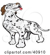Clipart Illustration Of A Friendly Dalmatian Dog Hanging Its Tongue Out by Snowy