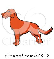 Clipart Illustration Of A Proud Brown Irish Setter Dog In Profile by Snowy