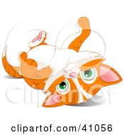 Clipart Illustration Of A Cute Orange Kitten Laying On Its Back And Looking At The Viewer