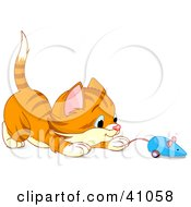 Playful Orange Kitten Playing With A Blue Mouse Toy