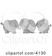 Three Elephants With Tusks