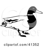 Clipart Illustration Of A Black And White Male Mallard Duck Profile by Prawny