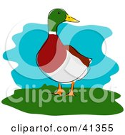 Clipart Illustration Of A Male Mallard Duck Standing On Grass And Looking Right by Prawny