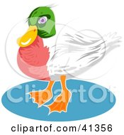 Clipart Illustration Of A Green Headed Duck With A Red Chest And White Wings by Prawny