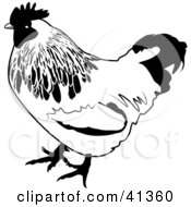 Black And White Sketch Of A Chicken