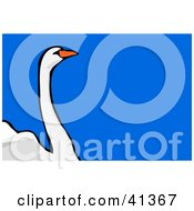 Clipart Illustration Of A Mute Swan With A Long Neck Over Blue