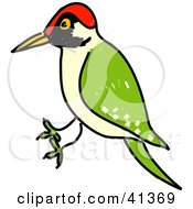 Clipart Illustration Of A Green Woodpecker Picus Viridis With A Red Head by Prawny