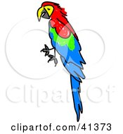 Clipart Illustration Of A Perched Red Green And Blue Scarlet Macaw Parrot