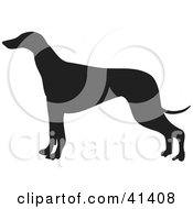 Clipart Illustration Of A Black Silhouetted Greyhound Dog Profile by Prawny