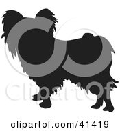 Clipart Illustration Of A Black Silhouetted Papillon Dog Profile by Prawny