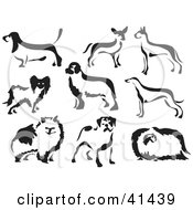 Clipart Illustration Of Nine Black And White Brush Painted Dogs by Prawny