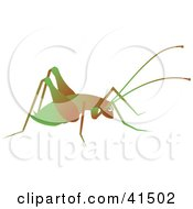 Clipart Illustration Of A Brown And Green Cricket by Prawny