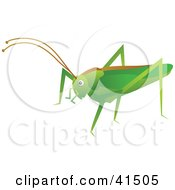 Clipart Illustration Of A Green Cricket With A Brown Line On Its Back by Prawny