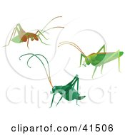 Clipart Illustration Of Three Green And Brown Crickets by Prawny