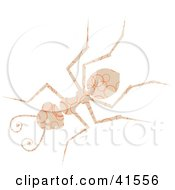 Clipart Illustration Of A Beige And Orange Ring Patterned Ant by Prawny
