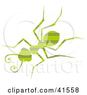 Clipart Illustration Of A Green Horizontal Striped Patterned Ant by Prawny