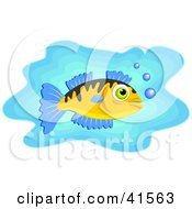 White Fish With Blue Fins And Bubbles In Blue Water
