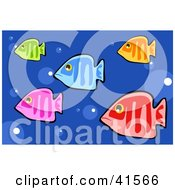 Five Colorful Fish Swimming In Blue Bubbly Water