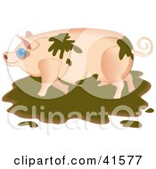 Clipart Illustration Of A Messy Pig Playing In The Mud