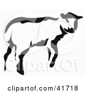 Black And White Paintbrush Stroke Styled Calf Or Lamb